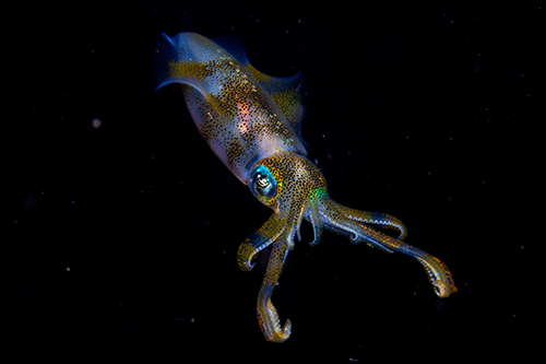 © Cruz Erdmann - Wildlife Photographer of the Year