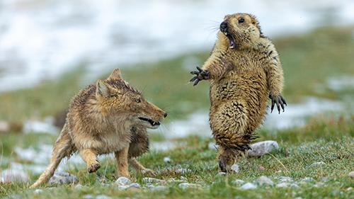 © Yongqing Bao - Wildlife Photographer of the Year