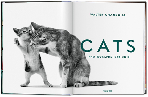fp walter_chandoha Innentitel cats-image_01_05344