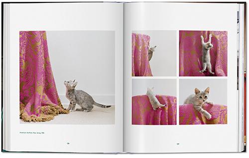 fp walter_chandoha_cats-image_03_05344
