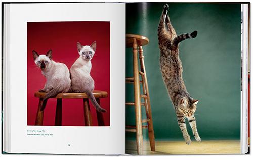 fp walter_chandoha_cats-image_04_05344