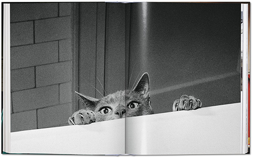 fp walter_chandoha_cats-image_06_05344
