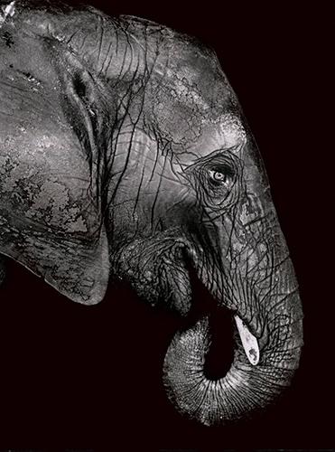 01_Elefant_29x39-548-14