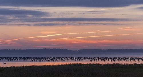 1_Kranichparadies Vogelschutzinsel Kirr_Martin Harms