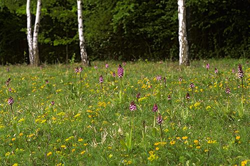 FP Orchideen 01
