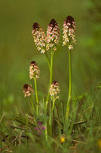 FP Orchideen05