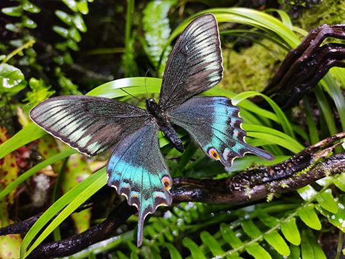 HONOR View 20_Beispielfoto_Butterfly Original (1)
