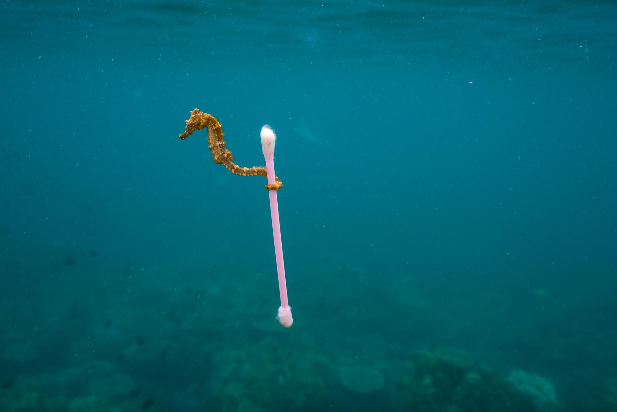 HZ19_Fotoausstellung_Vorsicht_Plastik_National_Geographic_©Justin_Hofman_Seahorse