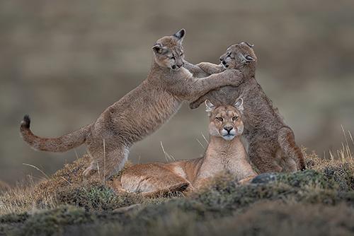 Jaeger Pumas, Ingo Arndt
