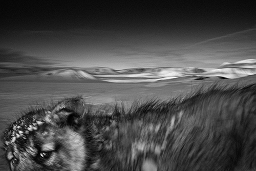 Loba 08_© Ragnar Axelsson_Arctic Heroes-Where the world is melting