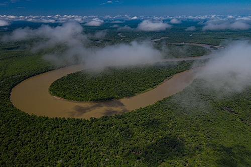 Mauthe Amazonas Regenwald