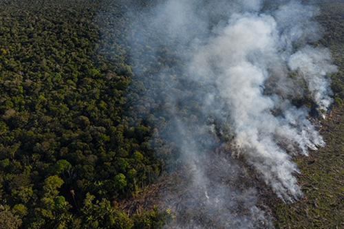 Mauthe Baeume und Rauch im Amazonas Regenwald
