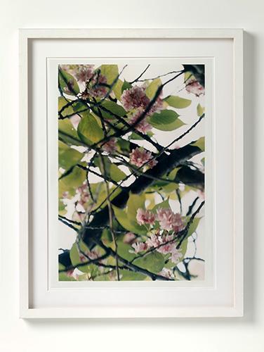 PIN Struth, Thomas (Kirschblüten)_high res_kleiner