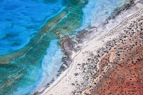 Sun, Yi, Shark Bay, Study 11, Western Australia, 2017