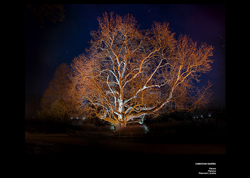 Bäume Christian Schörg 1120_2x_dibond_print_cewe_srgb-1