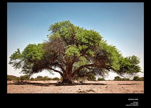 Bäume Marcos Lopez_print_cewe_srgb-4