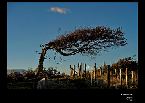 Bäume Martin Bernetti x_dibond_print_cewe_srgb-3