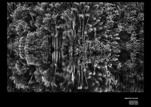 Bäume Sebastiao Salgado