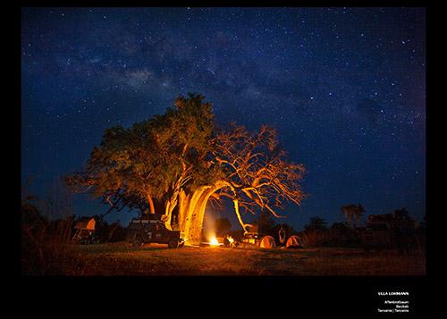 Bäume neu Lohmann 24_trees_02-05_1570x1120_4x_dibond_print_cewe_srgb-1
