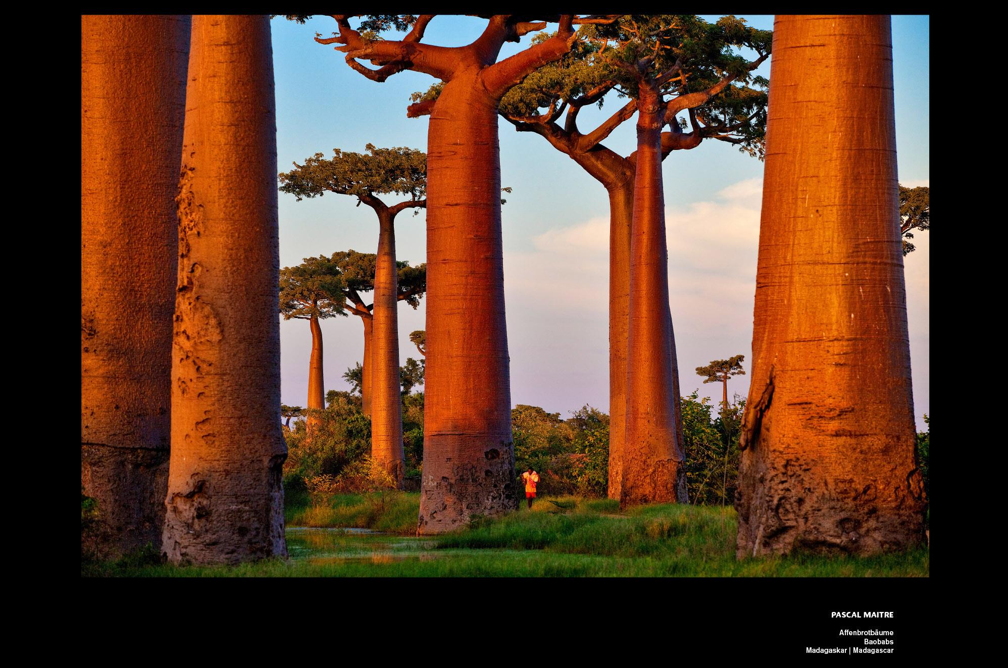 Bäume neu Maitre 24_trees_14_1690x1120_1x_dibond_print_cewe_srgb
