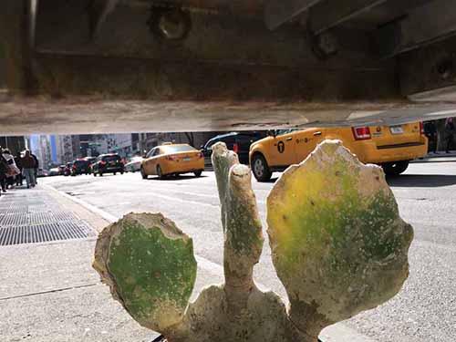 Jeff 4_Jeff Mermelstein_NYC2016_copyright Jeff Mermelstein_copyright Galerie Bene Taschen