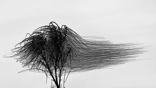Zingst JP21_AUS_Ornitographien©Xavi_Bou (3)