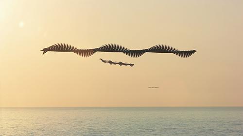Zingst JP21_AUS_Ornitographien©Xavi_Bou