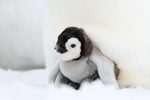 Teck 173  penguin043-wewb